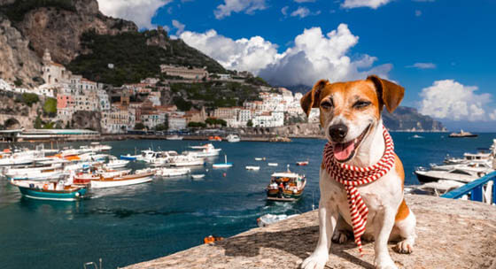 DOG TRAVEL OR MOVE ABROAD