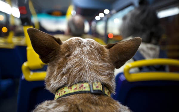 THE ULTIMATIVE DOG TRAVEL GUIDE