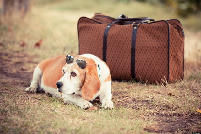 TRAVELING WITH YOUR DOG HACKS TIPS, VIDEOS, PHOTOS, GUIDE, MANUAL, INSTRUCTIONS