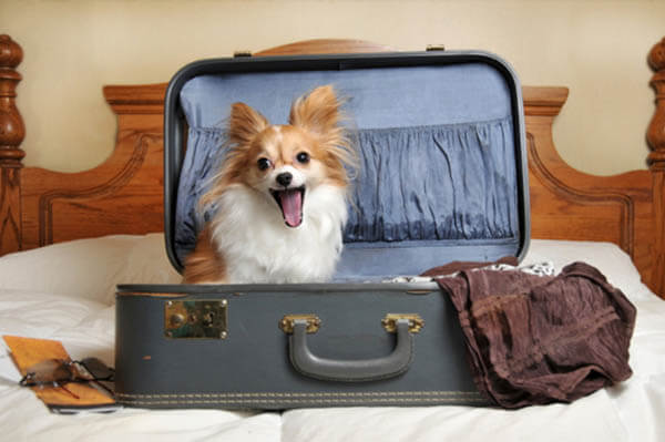 THE ULTIMATIVE DOG TRAVEL GUIDE - BEST PET TRAVELING SITES