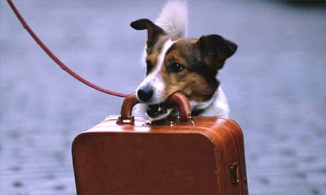 FLYING WITH YOUR DOG, AILINES, AIRPLANES, AIR COMPANIES, DOG TRAVEL