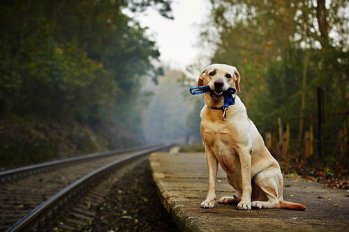 TRAVELING WITH YOUR DOG BY TRAIN, RAILWAY DOG JOURNEY, TRIP