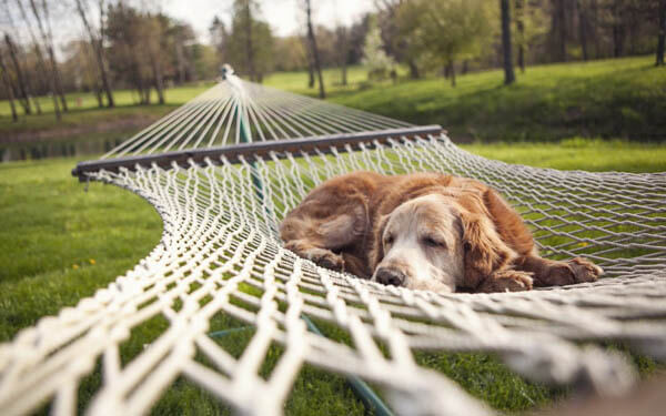DOG-FRIENDLY PLACES: HOTELS, CAMPINGS, APPARTMENTS
