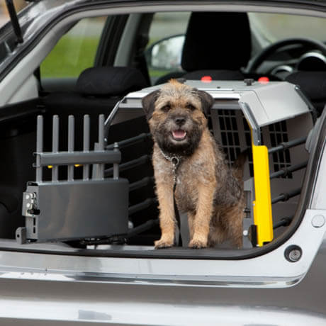 DOG TRAVEL TYPES & VARIATIONS