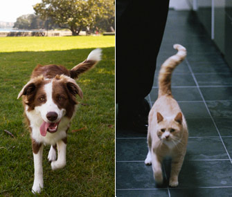 DOG vs CAT BODY LANGUAGE, COMMUNICATION SIGNS - COMPARISON, SIMILARITY & DIFFERENCE
