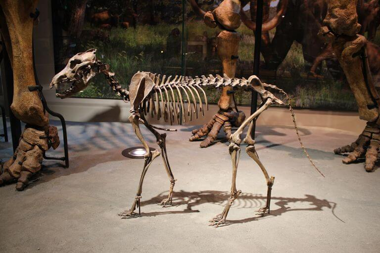 THE DIRE WOLF - PREHISTORIC ANCESTOR OF MODERN DOG