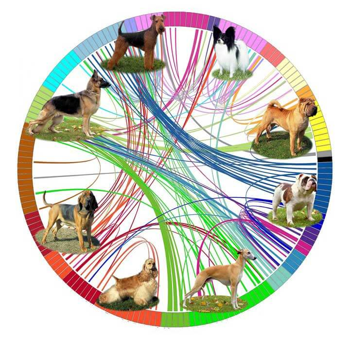 Dog Breeds Evolution & Domestication Chart