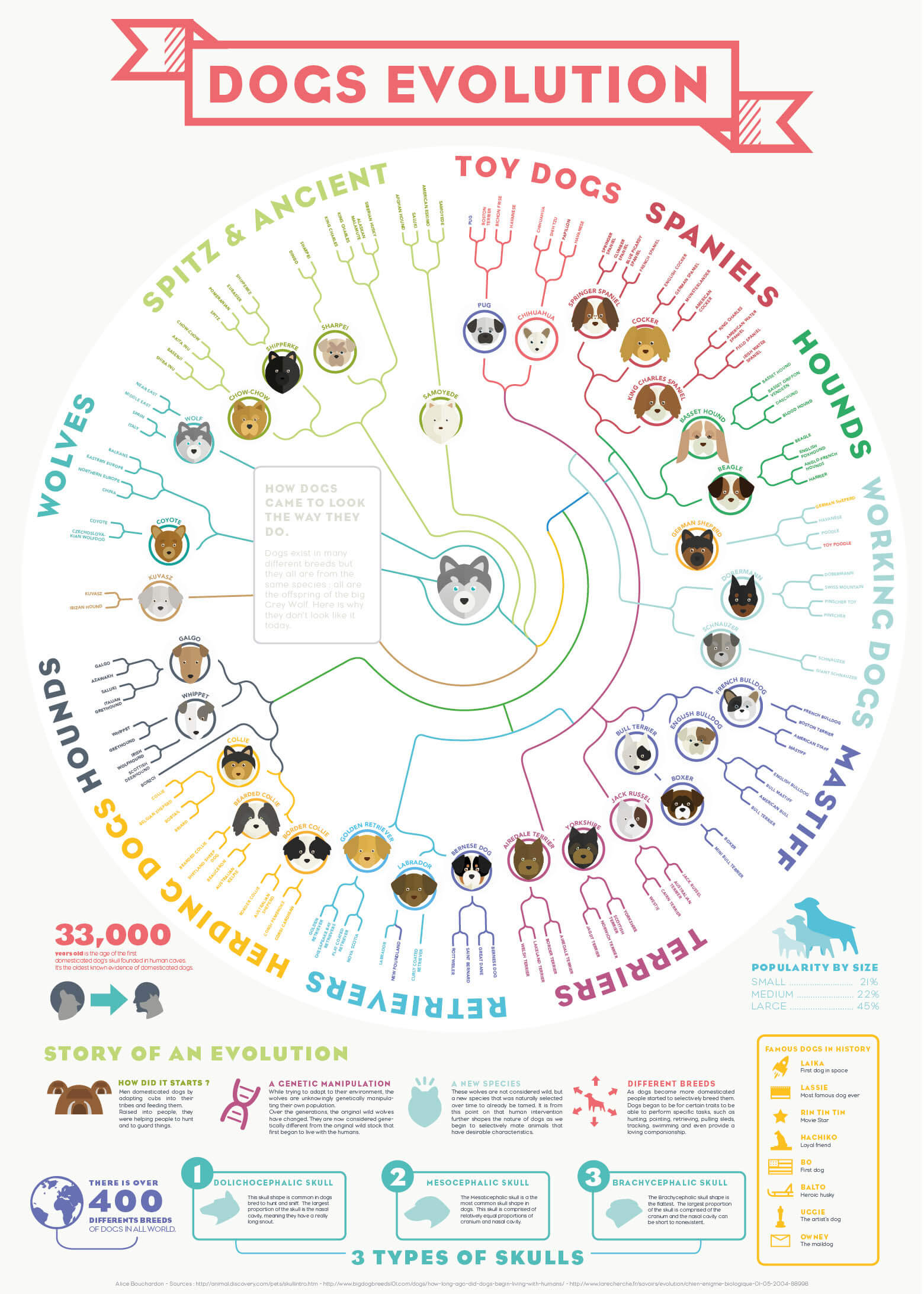 dog and puppy infograms, infographics - PRESS TO OPEN IN FULL SIZE !