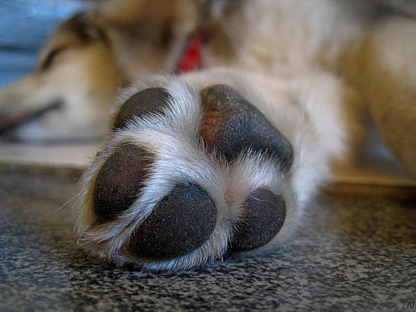 DOG PAWS MAINTAINANCE, CARE, HEALTH TIPS & INFORMATION