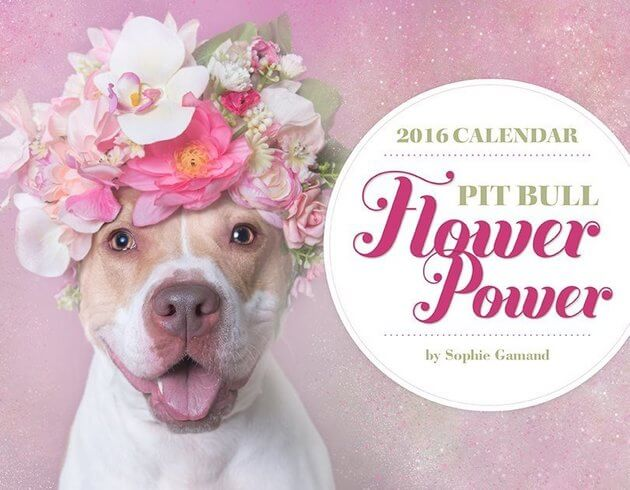 BEST TOP DOG and PUPPY CALENDARS, ART, GRAPHICS, POSTERS, PICTURES, WALLPAPERS, IMAGES, PHOTOS
