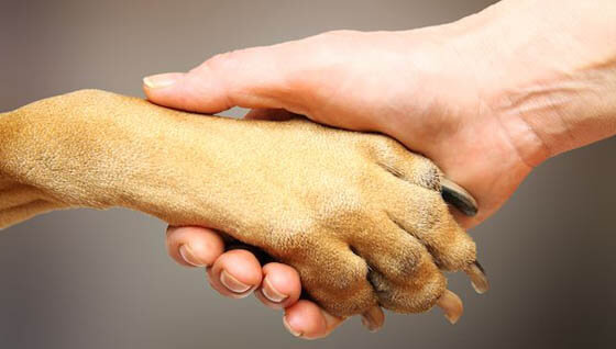 HOW TO CLEAN WASH DOG & PUPPY PAWS - MAINTAINANCE, CARE, HEALTH - TIPS & INFORMATION