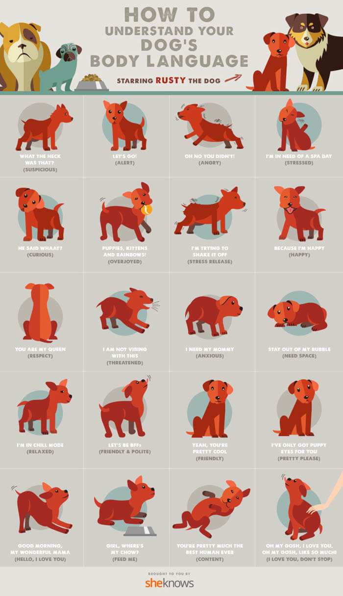UNDERSTAND DOG BODY LANGUAGE INFOGRAM