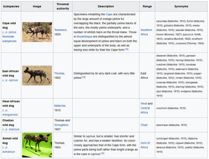 AFRICAN WILD DOGS EVOLUTION BY WWW.WIKIPEDIA.ORG