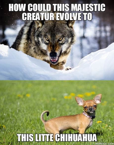 DOG AND WOLF, DOG & WOLF, DOG vs WOLF