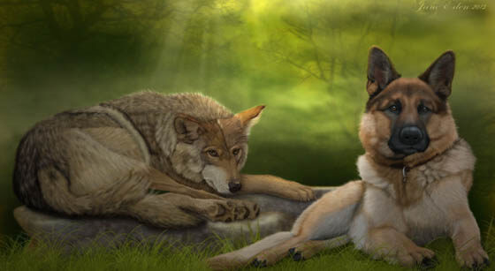 WOLVES & WOLF-DOGS AS PETS