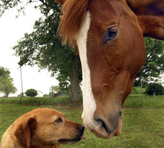 DIFFERENCES BETWEEN DOG AND HORSE