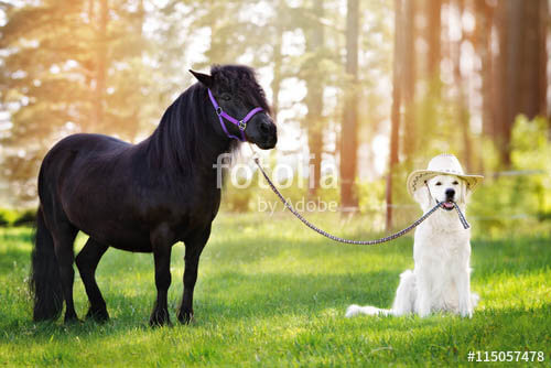 DOG AND HORSE, DOG & HORSE INTELLIGENCE: IS HORSE SMARTER THEN A DOG?
