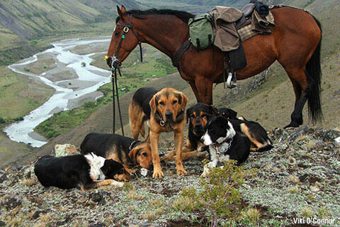 HOW TO INTRODUCE A DOG TO HORSE - DOG AND HORSE FRIENDSHIP