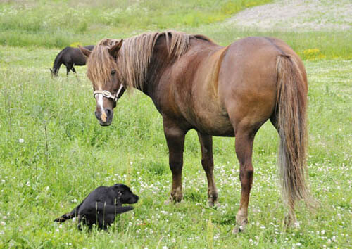 DOG & HORSE LAWS