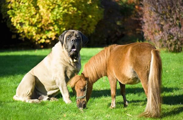 DOG AND HORSE TRAINING GUIDE