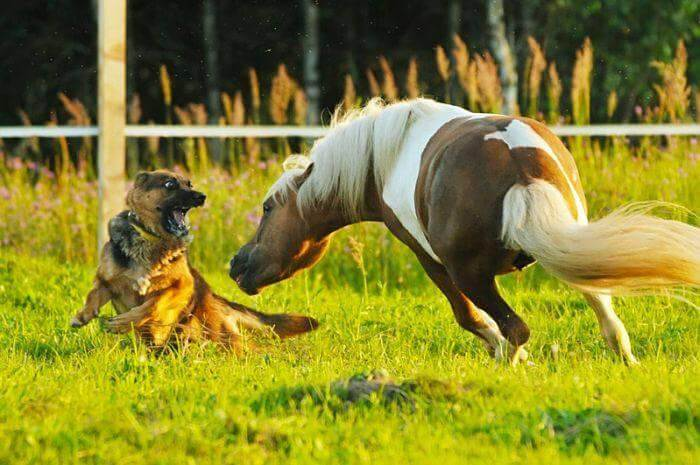 DOG AND HORSE TRAINING GUIDE & MANUAL, HOW TO TRAIN WORKING SERVICE DOG & HORSE