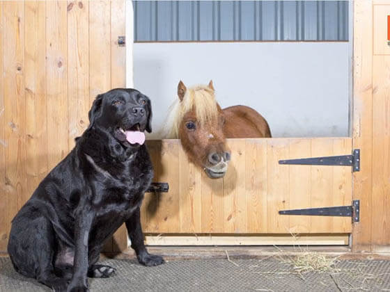 DOG AND MINIATURE GUIDE SERVICE HORSE, DOG VS MINIATURE HORSE, DOG & PONY