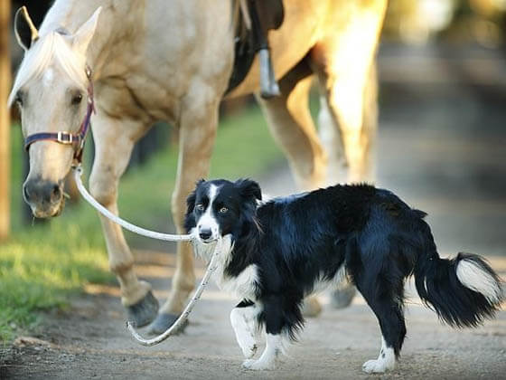 DOG AND HORSE FRIENDSHIP, DOG VS HORSE - BEST FRIENDS