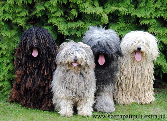 CHECK THE 1000 BEST PHOTOS & PICTURES OF OLD ENGLISH SHEEPDOGS at WWW.PINTEREST.COM