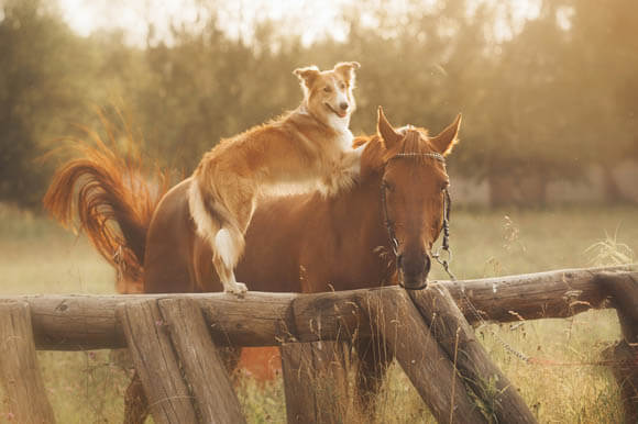 DOG AND HORSE TRAINING GUIDE, HOW TO TRAIN WORKING SERVICE DOG & HORSE